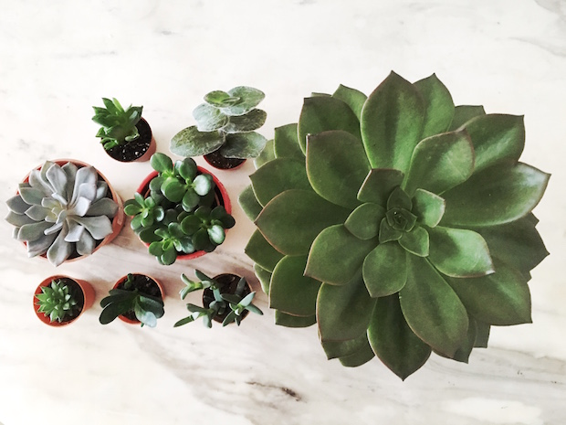 Portrait of succulents